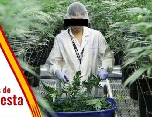 ¿Estás a favor de la legalización de la Marihuana en España que ha planteado Podemos?